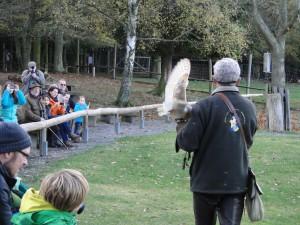 Vliegdemonstratie met roofvogels