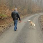 Wandelen met uw hond in het bos